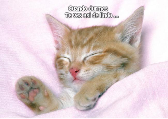 gatitos2
