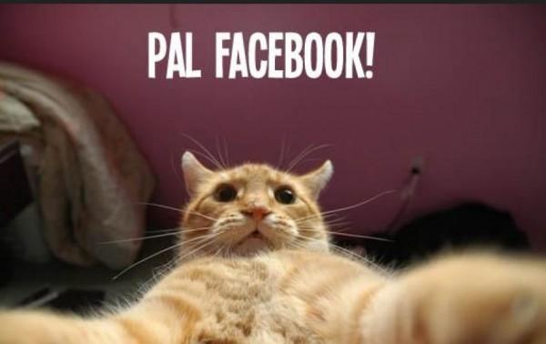 captura-de-pantalla-gatos-graciosos