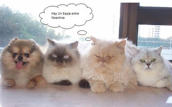 club gato