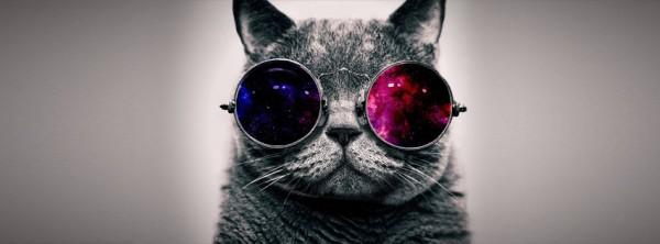 portada-gato-con-gafas-335