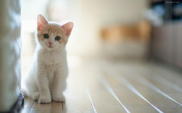 gato00
