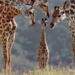 Imágenes de animales domésticos y salvajes, tiernos y bonitos para descargar y compartir