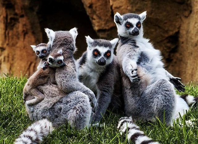 animalesfamilia.jpg23