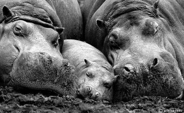 animalesfamilia.jpg24