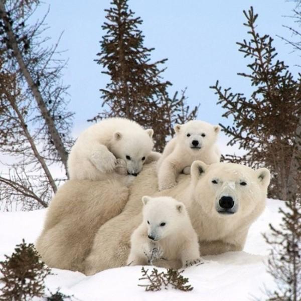 animalesfamilia.jpg2