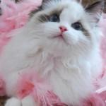 78 Imágenes bonitas de gatitos tiernos y divertidos para compartir