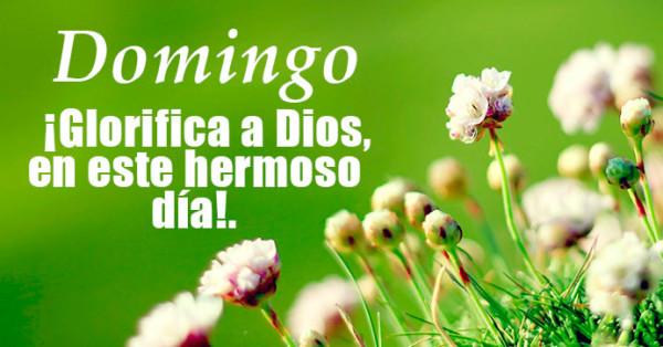 Imagen de flores con fondo verde y frase de Dios http://fechaespecial.com/