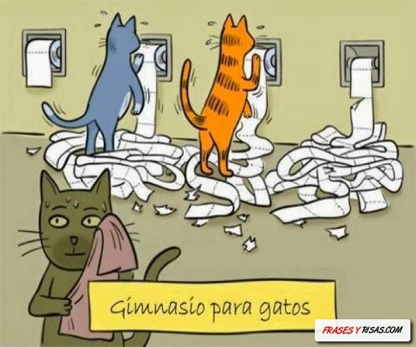 graciosa-jpg11