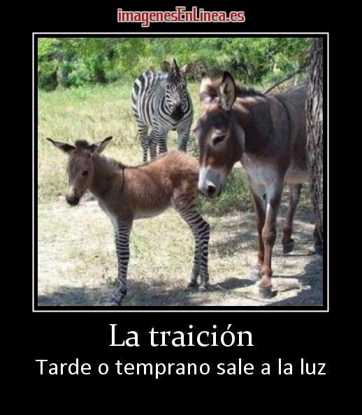 traicion-jpg15