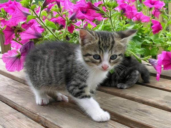 gatitos-fondos-pantalla