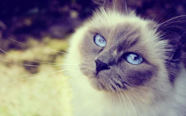 78 Imágenes Bonitas De Gatitos Tiernos Y Divertidos Para