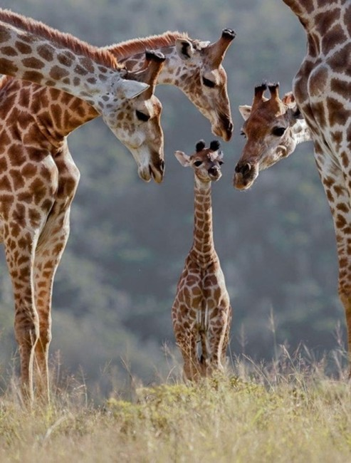 animalesfamilia
