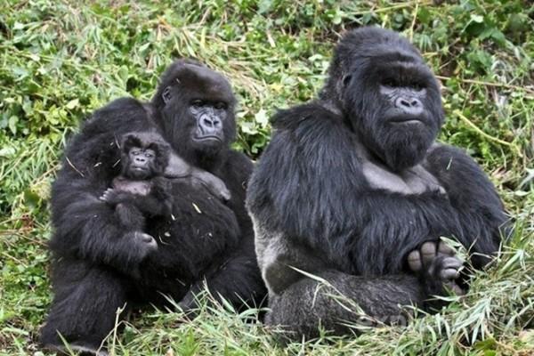 animalesfamilia.jpg1