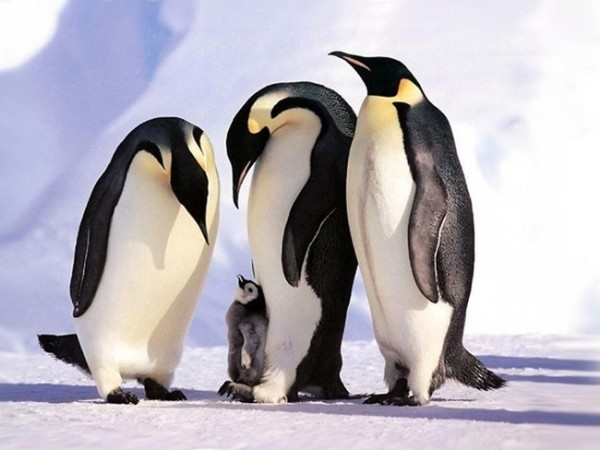 animalesfamilia.jpg5