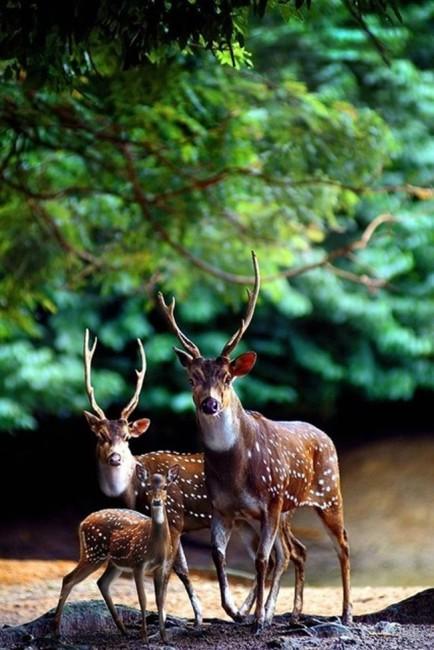animalesfamilia.jpg9