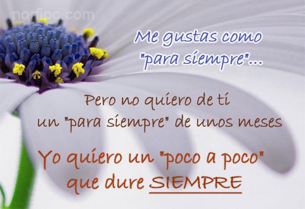 amor29