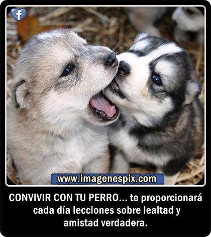 Imagenes De Animales Domesticos Salvajes Tiernos Y Bonitos