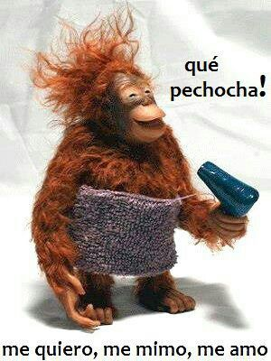 Imágenes Y Memes Super Graciosos Con Frases Chistosas De Monos
