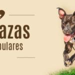 Imágenes bonitas de perros y razas de perro más populares