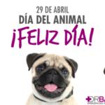 Día del animal 29 de abril 2017: Imágenes y mensajes