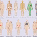 80 Imágenes de los sistemas del cuerpo humano para niños