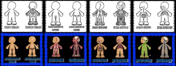 Sistemas Del Cuerpo Humano Para Niños 80 Imágenes E