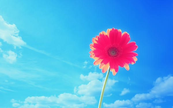 Fondos De Pantalla De Flores Hermosas Para Fondo Celular: Fondos De Pantalla 2019 » Los Mejores Wallpapers 2019